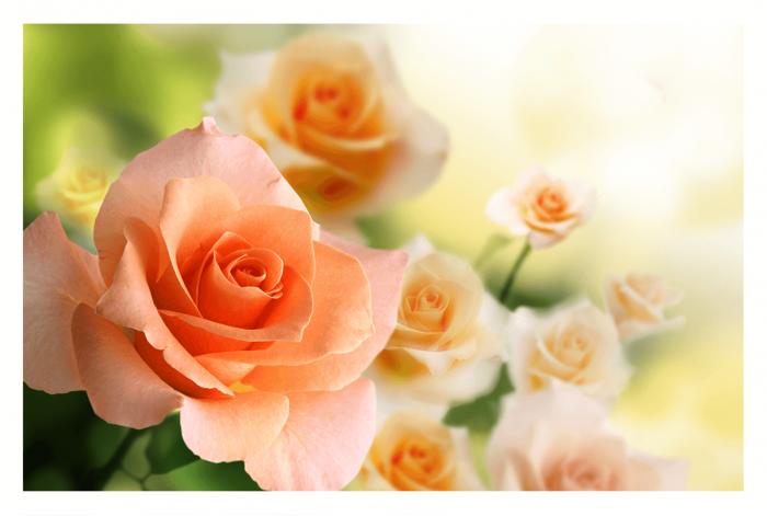 Модульная картина Роза