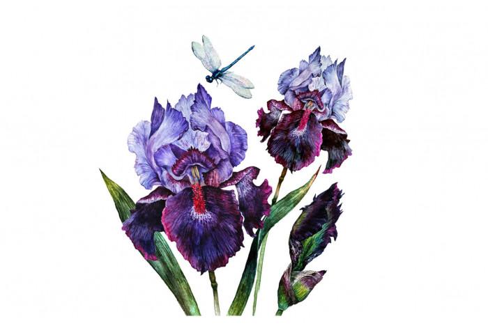 Картина Нежно фиолетовый ирис