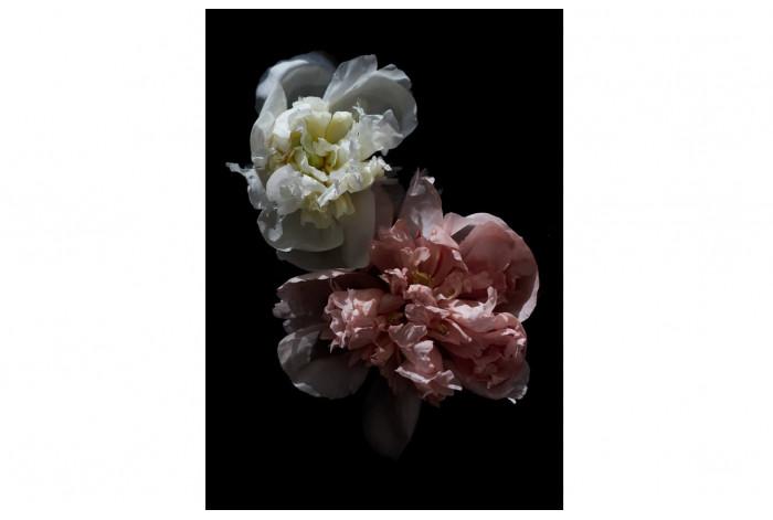 Картина Розовый и белый пион