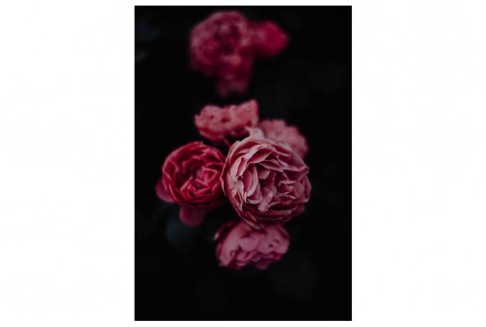 Картина Тёмно-розовый пион